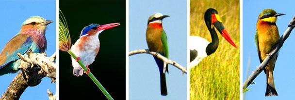 botswana-06-15-image6